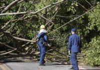 Madeira de árvores derrubadas pelo ciclone podem ser usadas no reparo dos danos