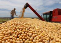 Perdas na produção de soja e milho em SC sobem para R$ 375 milhões