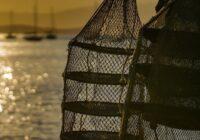 Áreas da Grande Florianópolis estão autorizadas a retirar e comercializar ostras e mexilhões
