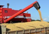 Produção de grãos deve crescer 5% na próxima safra, estima Epagri