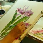 Orquídea símbolo de Santa Catarina é tema de exposição gratuita